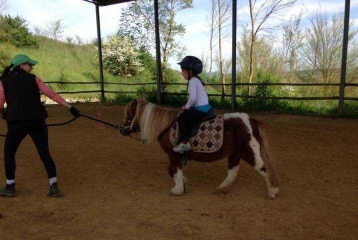 horse2-1024x686